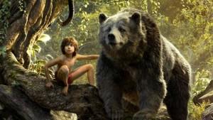 libro oso