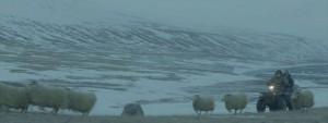 Rams, la historia de dos hermanos y ocho ovejas: Separados del rebaño 2