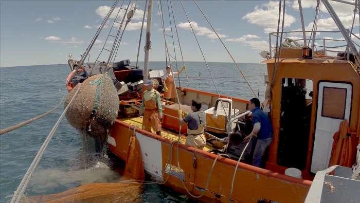 Legado del mar: Vida acuática 1