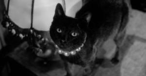 Punto muerto: Tan negro como un gato negro 2